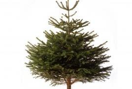 christmas_tree_2_